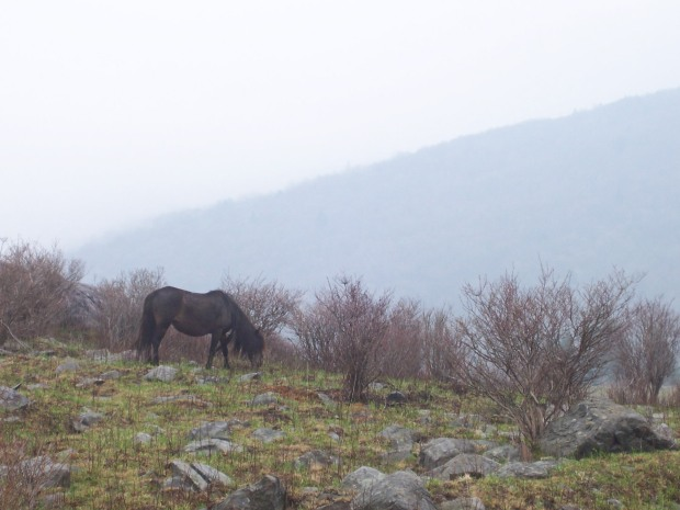 Mule and Inchworms 2021 Appalachian Trail Journal