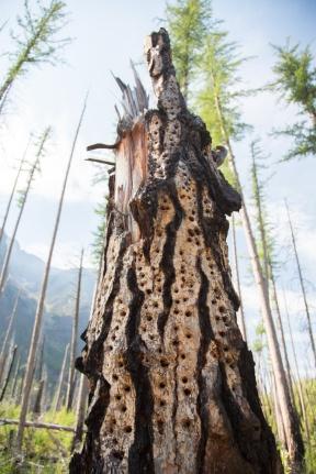 A sculptural tree