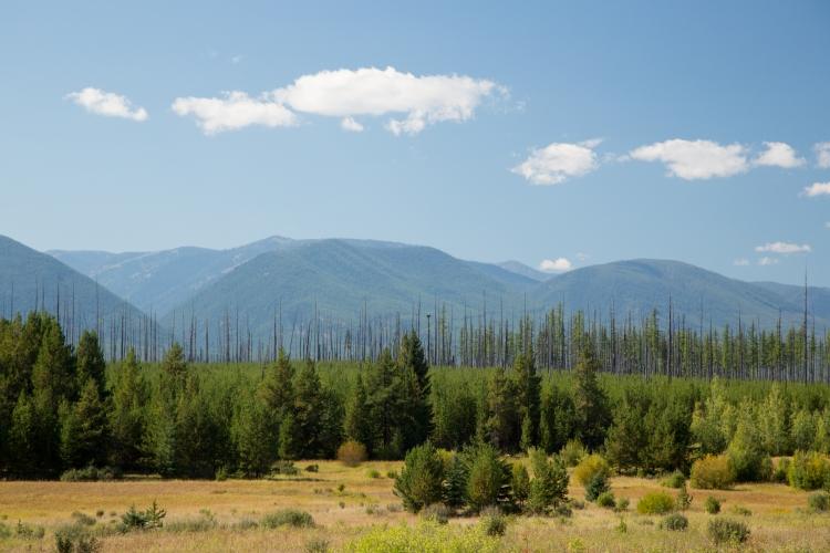 Hidden Meadow, Glacier National Park