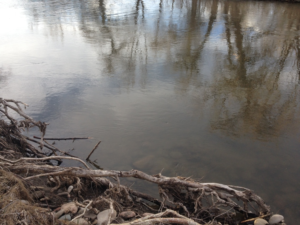 Roots and reflections in the Poudre