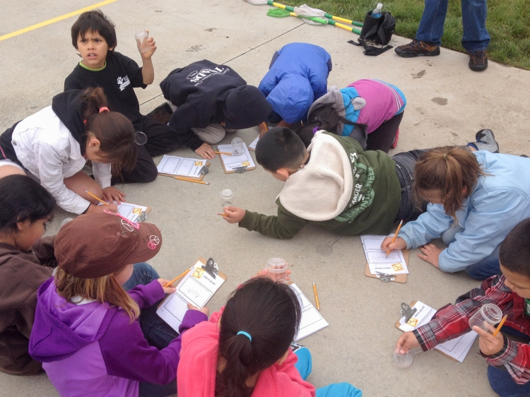 Anna taught her second field trip on Friday. The kids walk the field collecting critters in their bug boxes, then bring them back to the circle to draw and write down their observations.