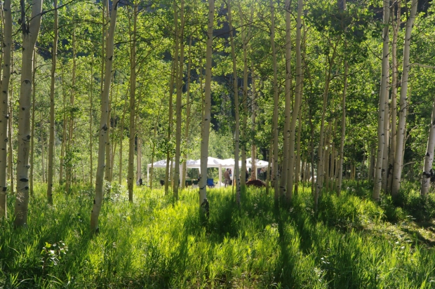 A view of our gathering place through the aspens