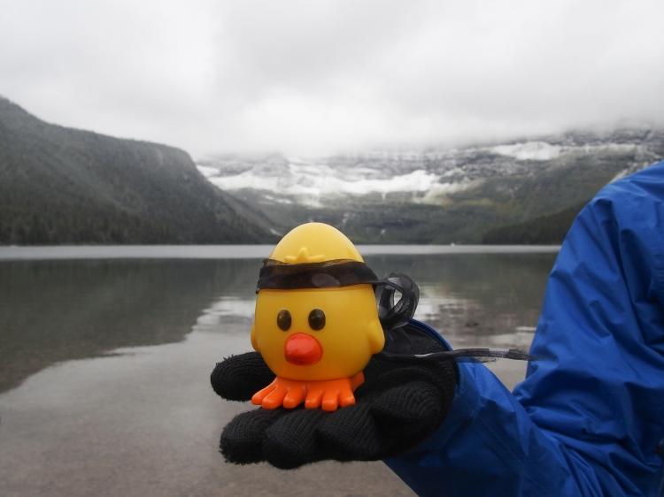 Cheep Cheep at Cameron Lake