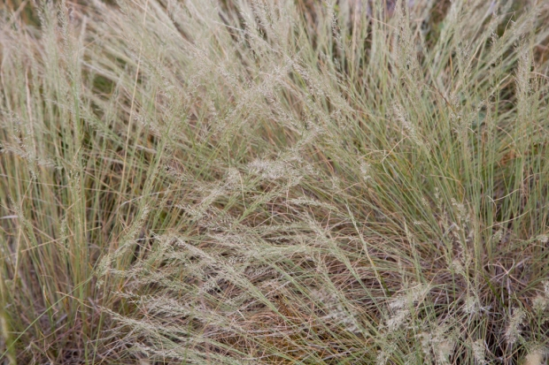 Grasses in Lory State Park