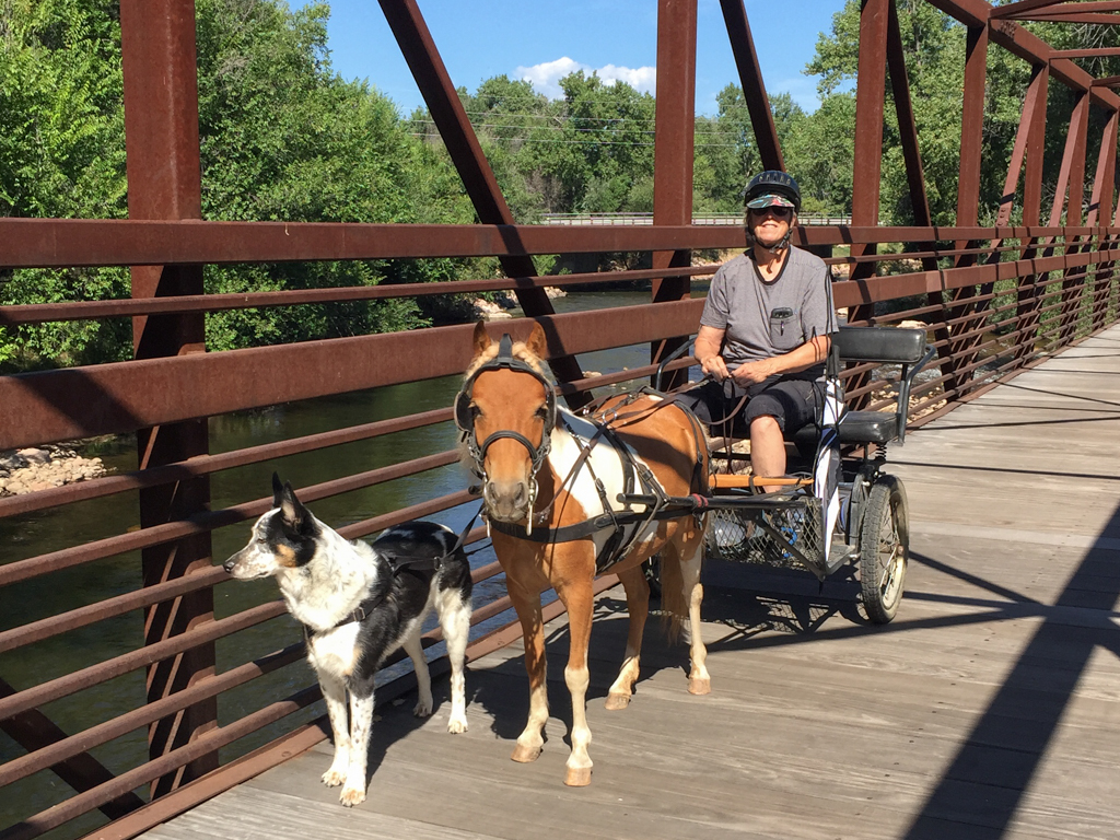 Pony and dog pulling a small carriage