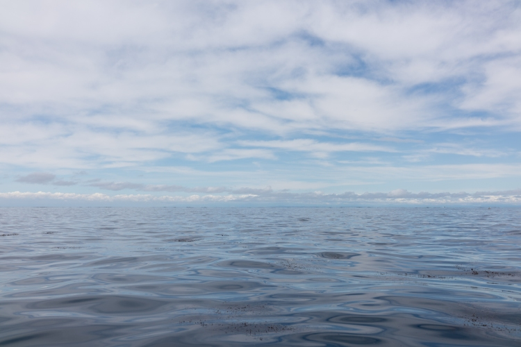 Catalina Ocean