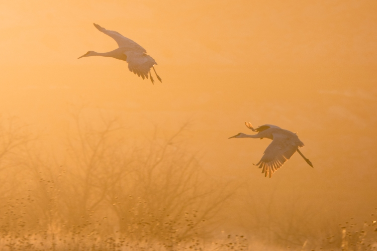 It was mesmerizing watching each set of cranes glide gracefully over the pond